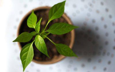 Déménagement vert : les astuces pour déménager de manière écologique